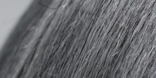 'old' gray hairs return their 'young' pigmented