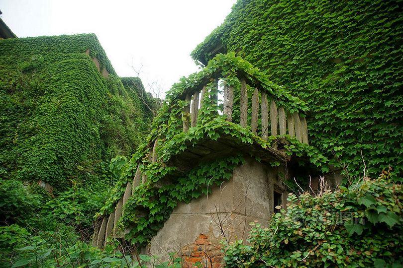 Houtouwan the ghost village is only visited by tourists to see abandoned houses drowning in vines