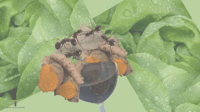 ✅buscar-home-inicio-hormiga-familia-formicidae-