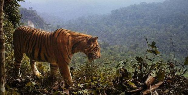 Macam-Macam Fauna yang Ada di Indonesia
