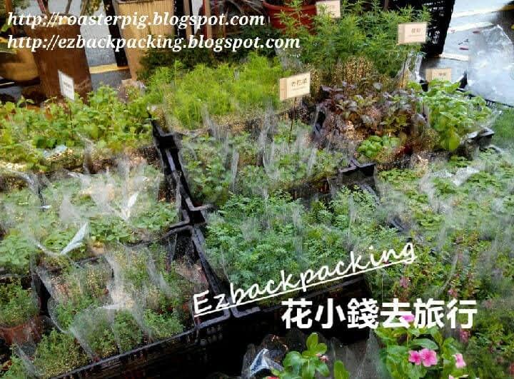 旺角花墟香草盆栽