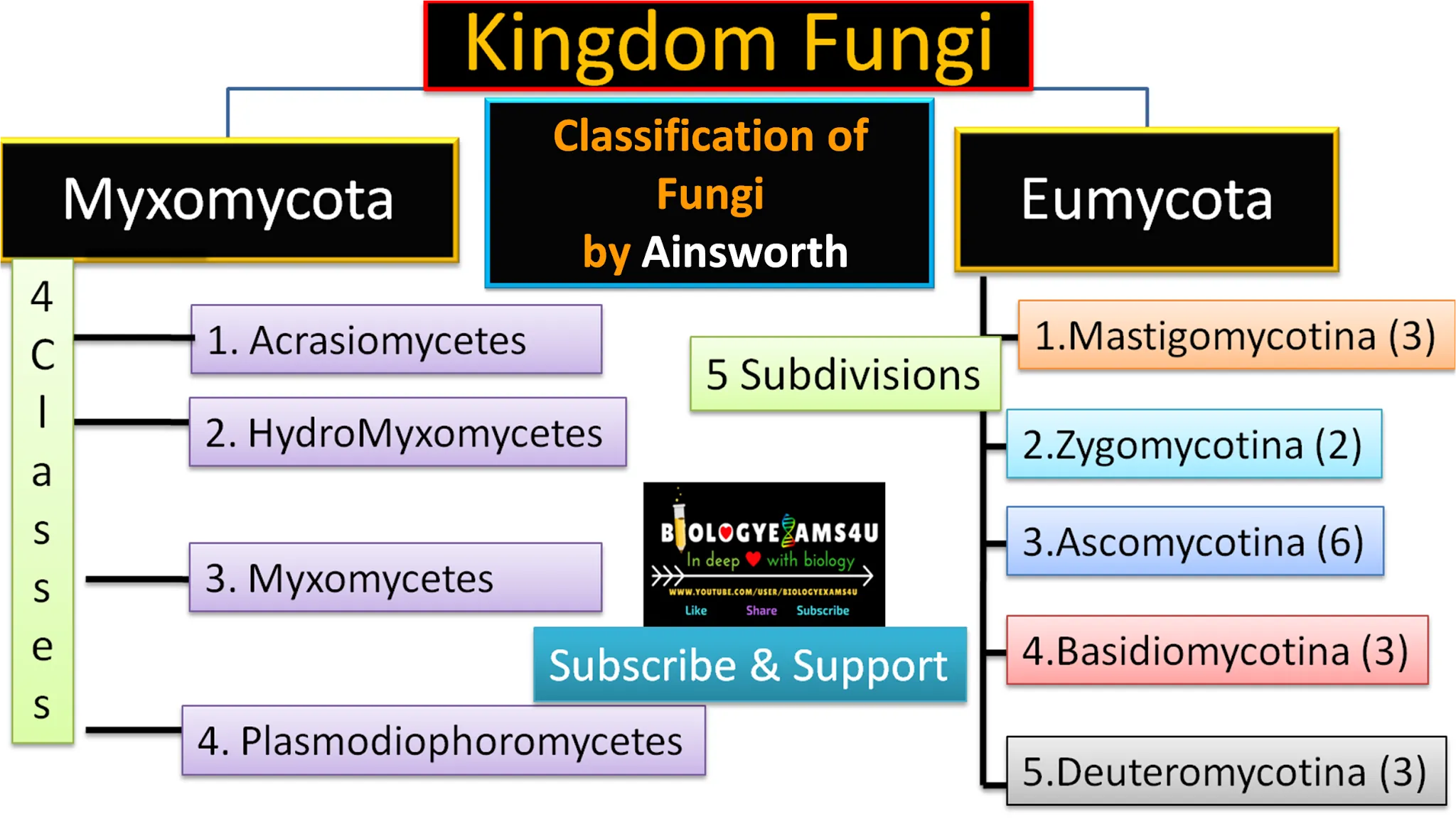Ainsworth classification of Fungi Flow chart with example