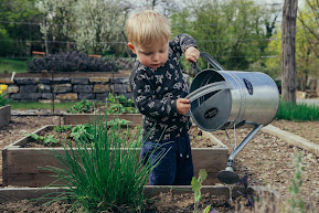 A little blond boy watering a raised bed with a silver metal watering can. Photo by Filip Urban on Unsplash.