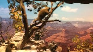 Grand Canyon Diorama Disneyland Railroad