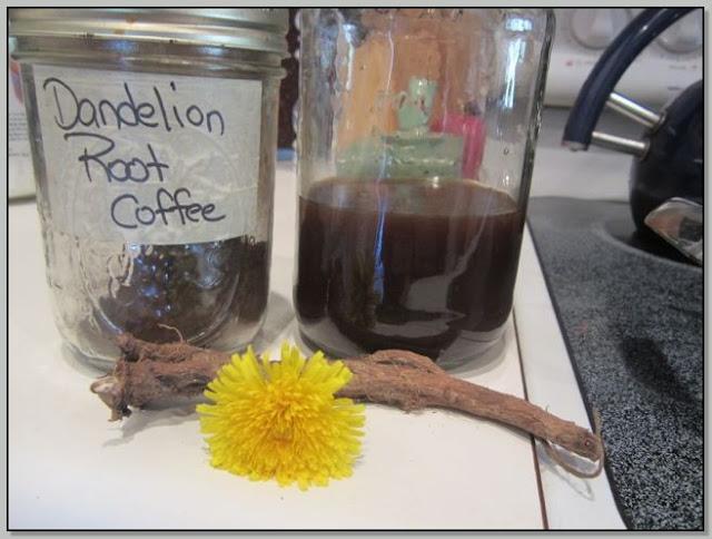 Dandelion Root As Coffee Substitute
