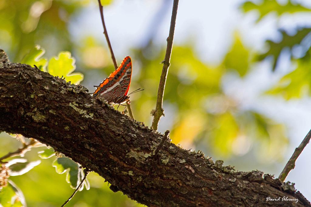 Imagenes Bonitas De La Naturaleza