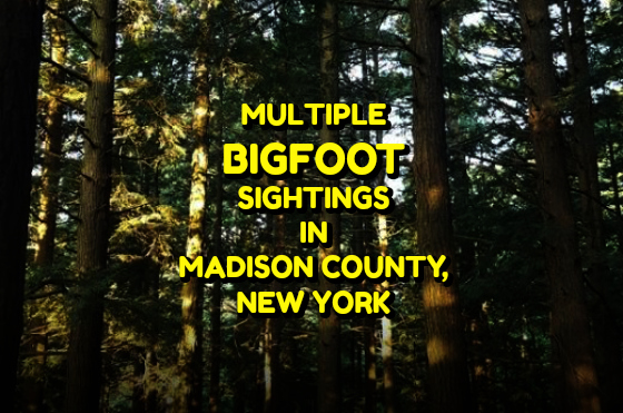 Multiple Bigfoot Sightings in Madison County, NY