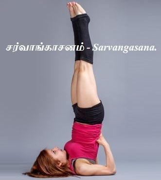 சர்வாங்காசனம் - Sarvangasana.