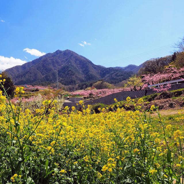 黒駒 桃 菜の花