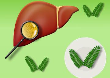 Receita Contra Gordura no Fígado: Chá de Folhas de Tamarindo