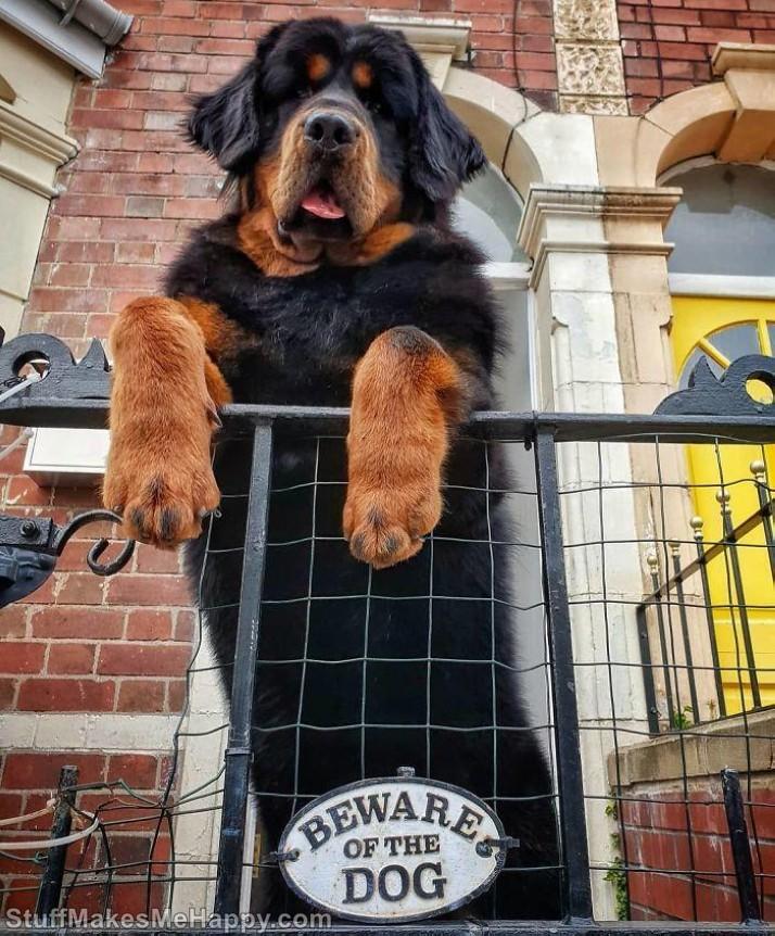 18. Beware of hugs Dogs!