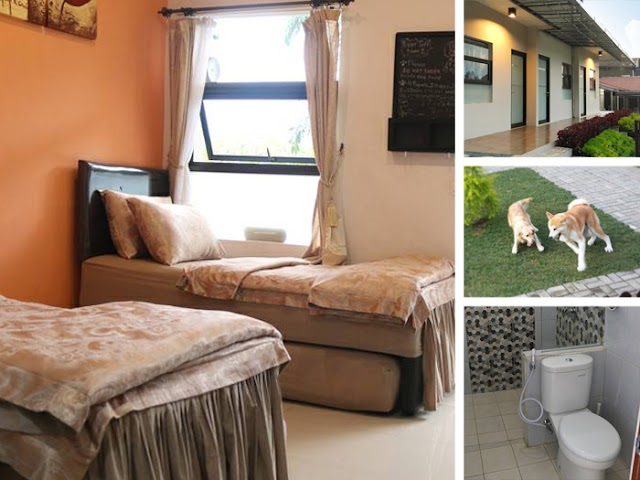 Mj's Guesthouse Lembang Penginapan Buat Dog Lovers
