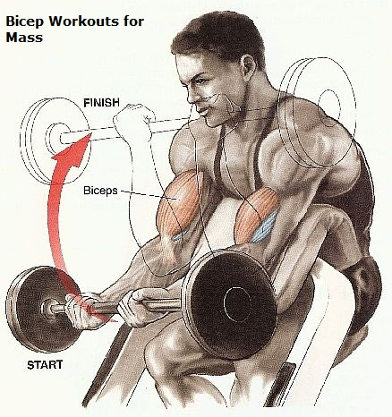 How To Get More Mass In Biceps?