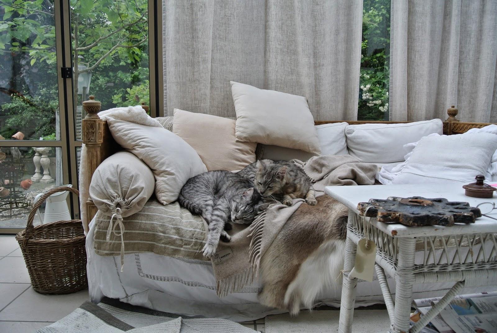 mehrkuriosa fr hjahrs m digkeit und neuer haupt job. Black Bedroom Furniture Sets. Home Design Ideas