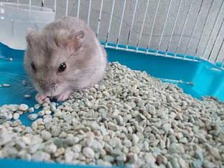 pasir zeolit untuk hamster