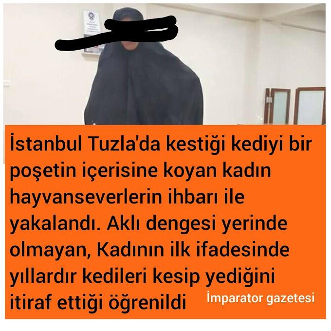 İstanbul Tuzla haberleri - kedi kesip yedi