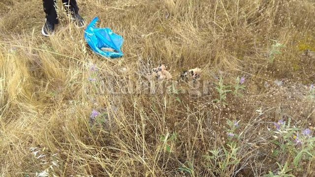 Πέταξε σακούλα με νεογέννητα κουταβάκια στο ρέμα
