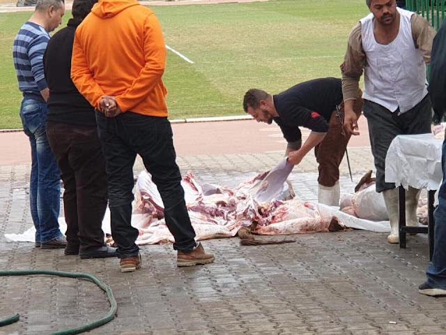 لاعبو الأهلي يذبحون عجلا لفك نحس الإصابات الذي يطارد الفريق