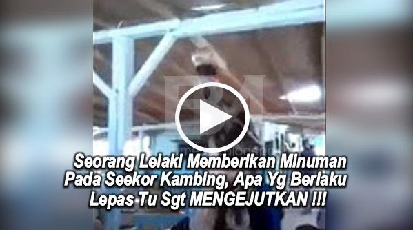 [VIDEO & GAMBAR] Seorang Lelaki Memberikan Minuman Coca-Cola Pada Seekor Kambing, Apa Yg Berlaku Lepas Tu Sgt MENGEJUTKAN !!!