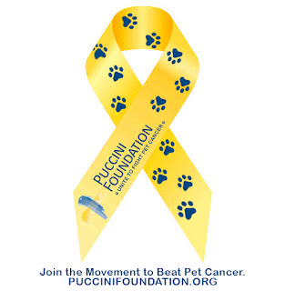 Yellow ribbon with The Puccini Foundation and blue paw prints