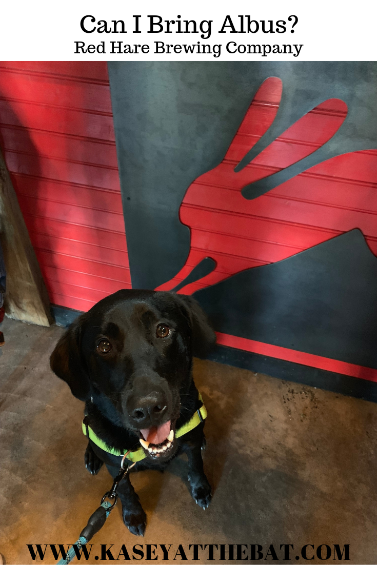 dog in front of red hare rabbit logo on bar