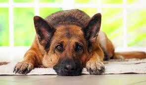 Perros le Salvan Vida Anciana