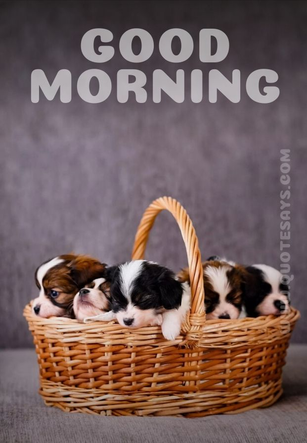 Beautiful Good Morning of Cute Dogs in Bucket