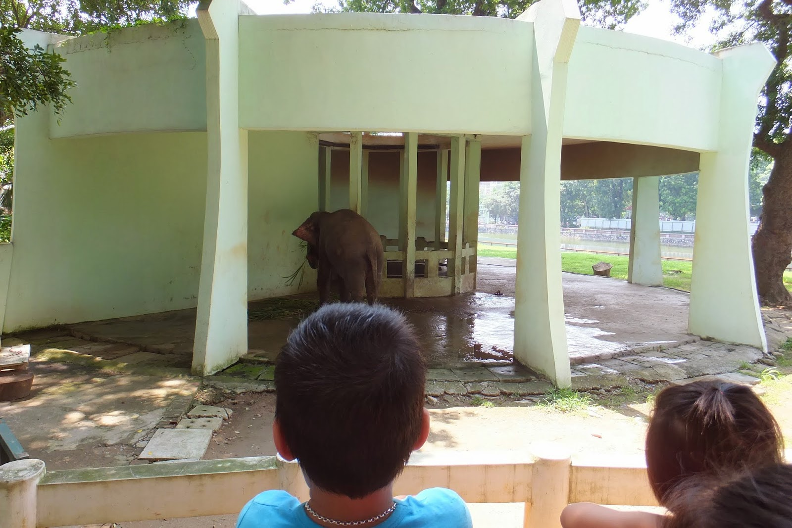 hanoi-zoo-elephant ハノイ動物園の象