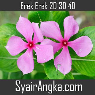Erek Erek Bunga Tapak Dara 2D 3D 4D