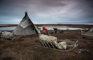 Mengenal Suku Nenets Terakhir Yang Tinggal Di Bagian Utara Terpencil Dunia