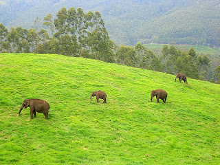 best honeymoon package in Munnar