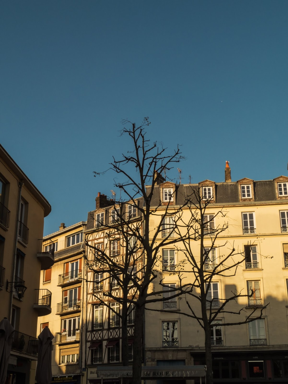 A bare tree in front of a sunlit building in Rouen, France.