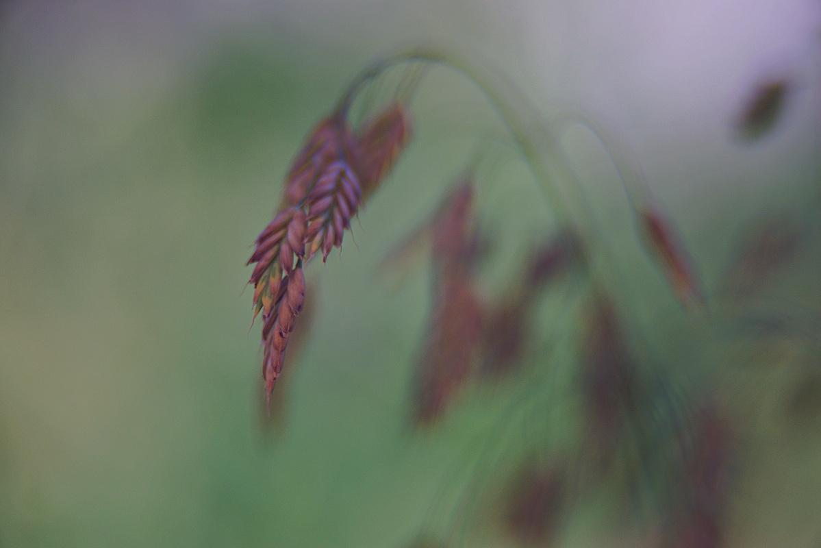 Offenblendiges von meiner Blumenwiese (5)