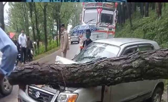 हिमाचलः चलती कार में गिरा पेड़, गाड़ी पूरी तरह से क्षतिग्रस्त