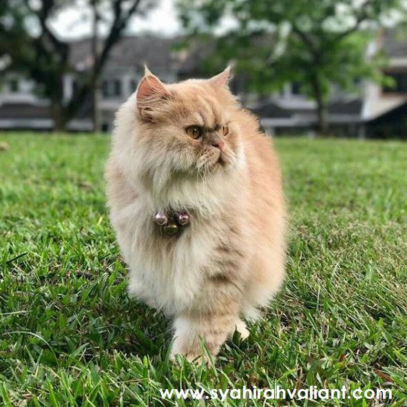 Kucing Pun Pandai Ber'posing'