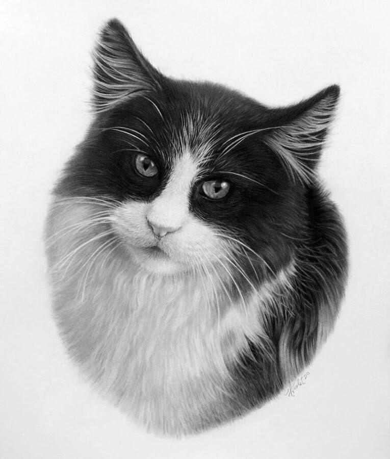 05-Black-and-white-cat-Helen-Violet-www-designstack-co