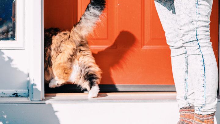 how-to-install-pet-door