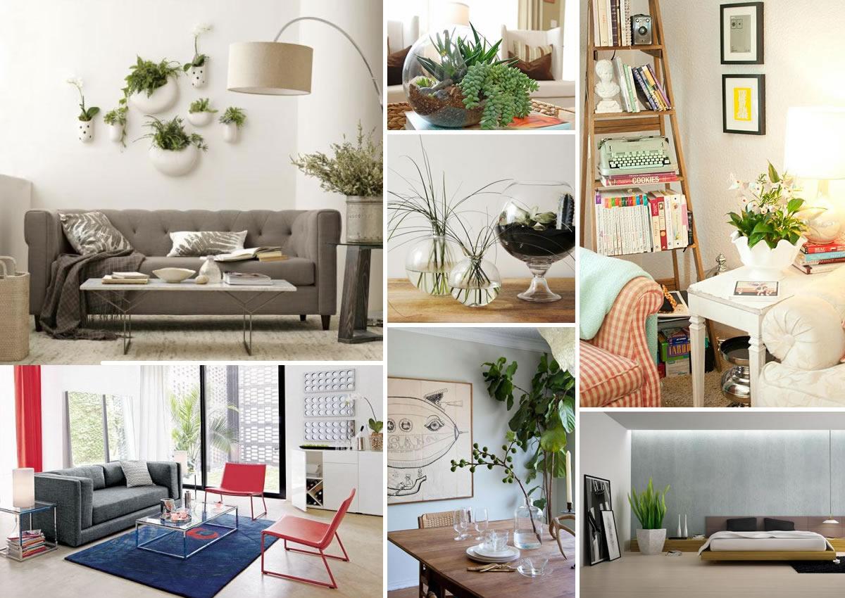 Foundation dezin decor go green indoor landscaping - Indoor plants decoration ideas ...