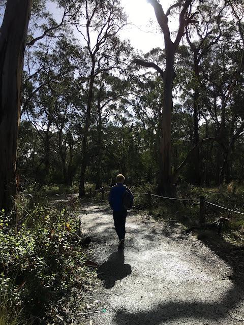 Koala conservation centre phillip island melbourne australia