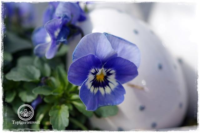 Gartenblog Topfgartenwelt Topfgarten + DIY mit Knagglig (Kiste) und Töpfen viel Platz auf kleinem Raum schaffen - Blumendeko mit Hornveilchen und Bellis passend für den Frühling und Ostern: Hornveilchen als Osterdeko für den Garten