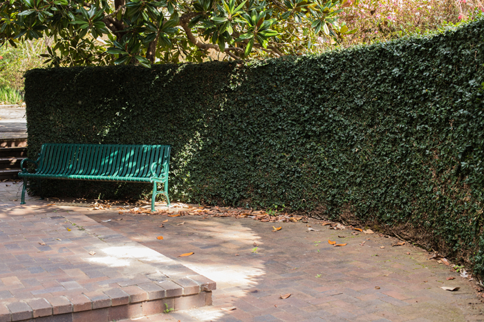 bench with hedge behind