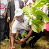 World Environment Day: Edo plans big for forest revival