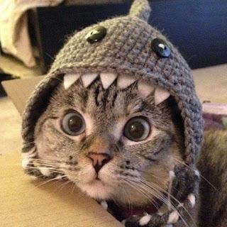 Imagens Encantadoras De Gatos Fofos Lindos E Engraçados Para Sorrir e Se Encantar.