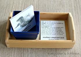 Seals of Antarctica Picture and Description Cards