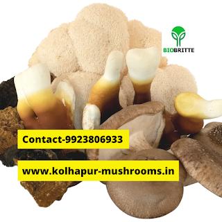 Oyster mushroom powder recipe