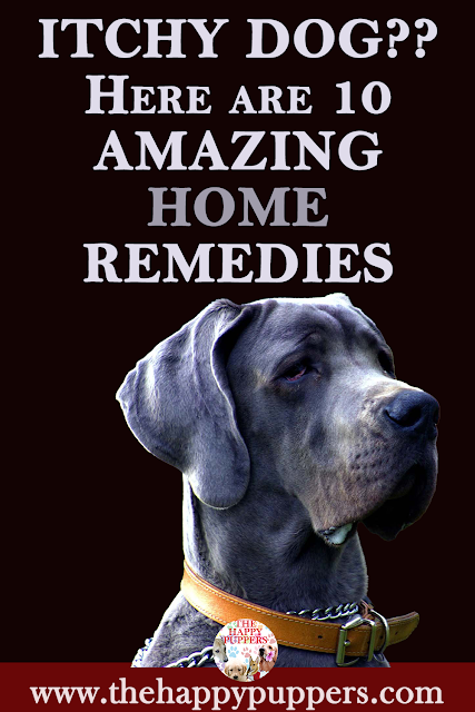 10 amazing home therapy options to reduce itching in dogs