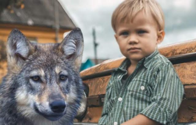 Рыдало всё село. Волк из последних сил тащил раненого мальчика к людям