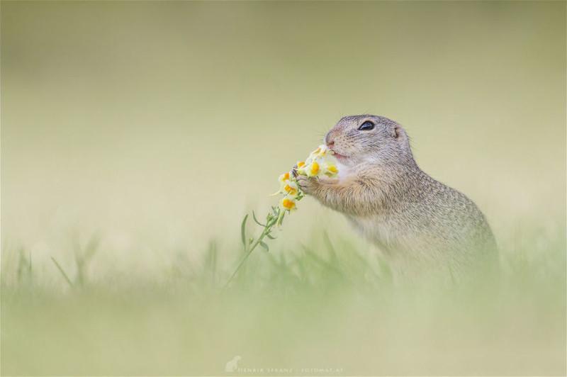 7 красивых фотографий сусликов