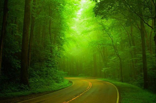 beat nature photo pic image download