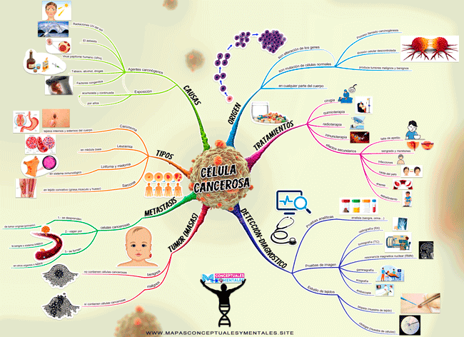 Mapa mental de la célula cancerosa, causas, tratamientos, origen